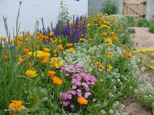 Elegant Cutting Garden Ideas : Cutting Garden Flower Bed Edging Image Id 42393    GiesenDesign