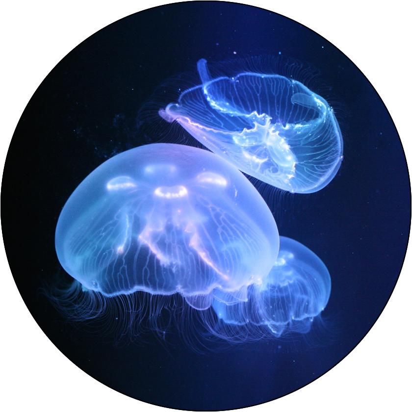 Deluxe Jellyfish Package Pet jellyfish, Jellyfish tank