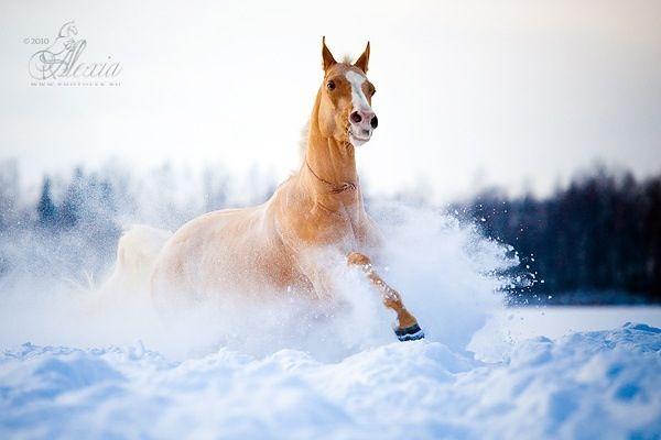 pferd pferde pferd im schnee pferde im schnee pferd. Black Bedroom Furniture Sets. Home Design Ideas