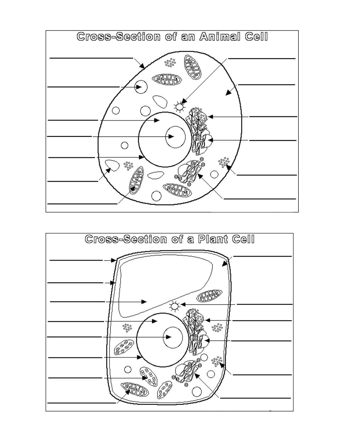 Decor Home Blank Diagram Of A Plant And Animal Cell