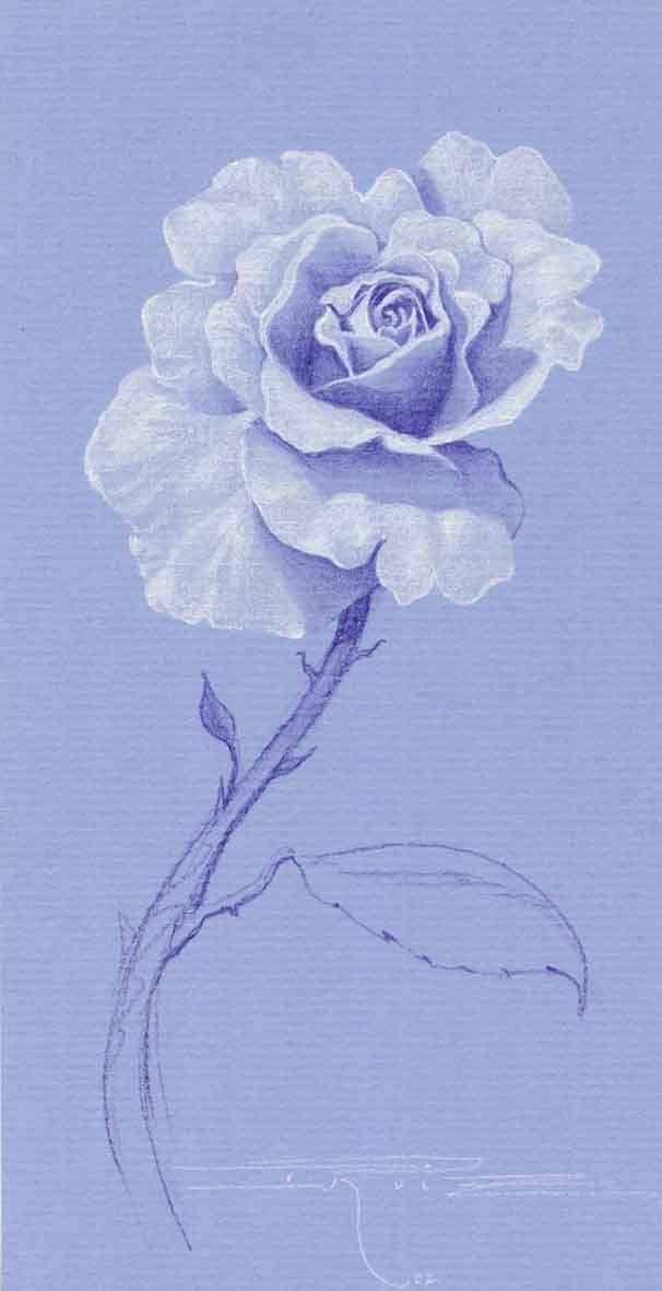 Flor blanca (Drawing) https://www.facebook.com/ElEternoproblema/