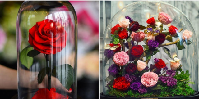 These Real Enchanted Roses Last 3 Years Without Water or Sunlight  - Seventeen.com