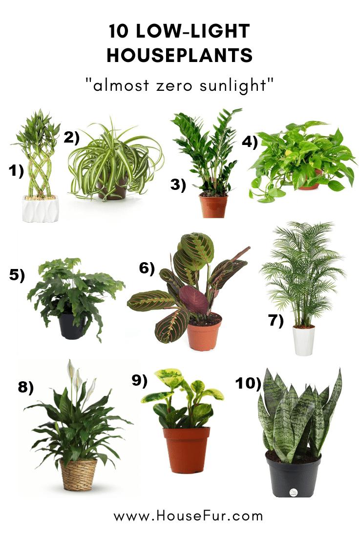 10 Houseplants That Need Almost Zero Sunlight In 2020 Houseplants Low Light Indoor Plants Low Light Low Light House Plants