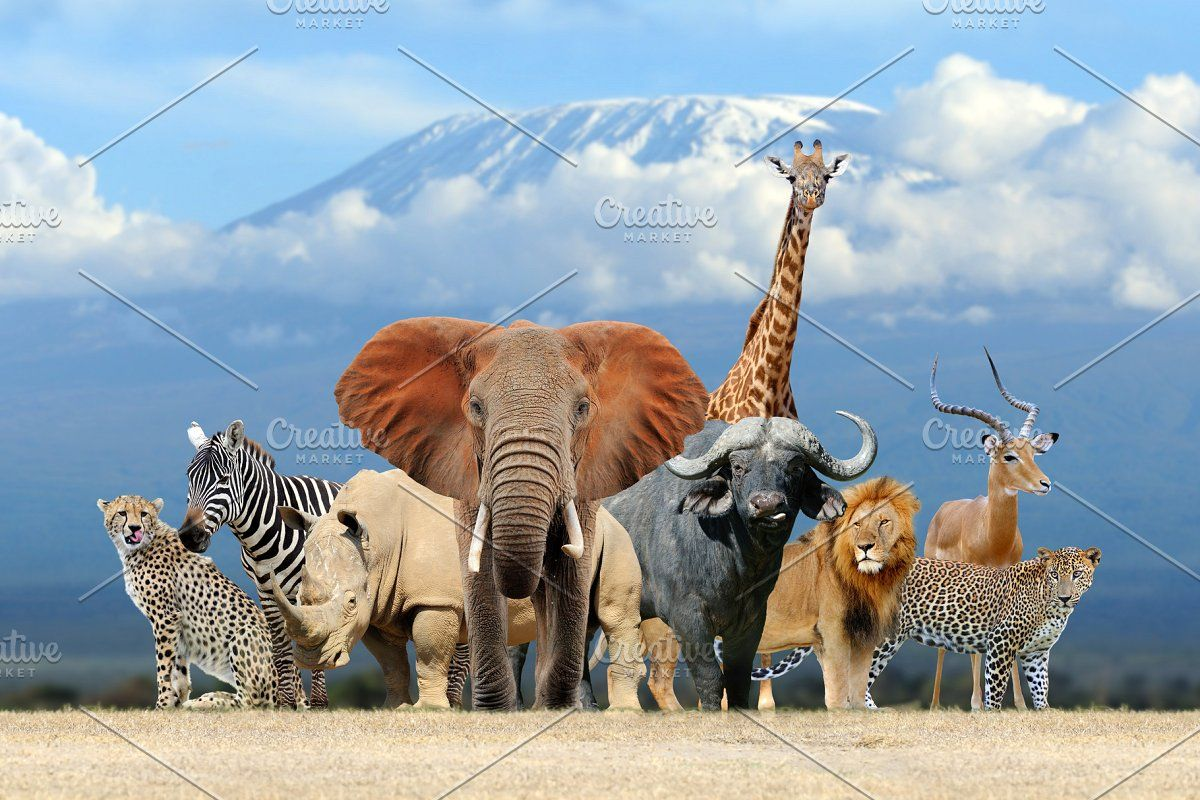 Collage of 100 photos of wildlife in 2020 | Animals, Safari animals, Animal  categories