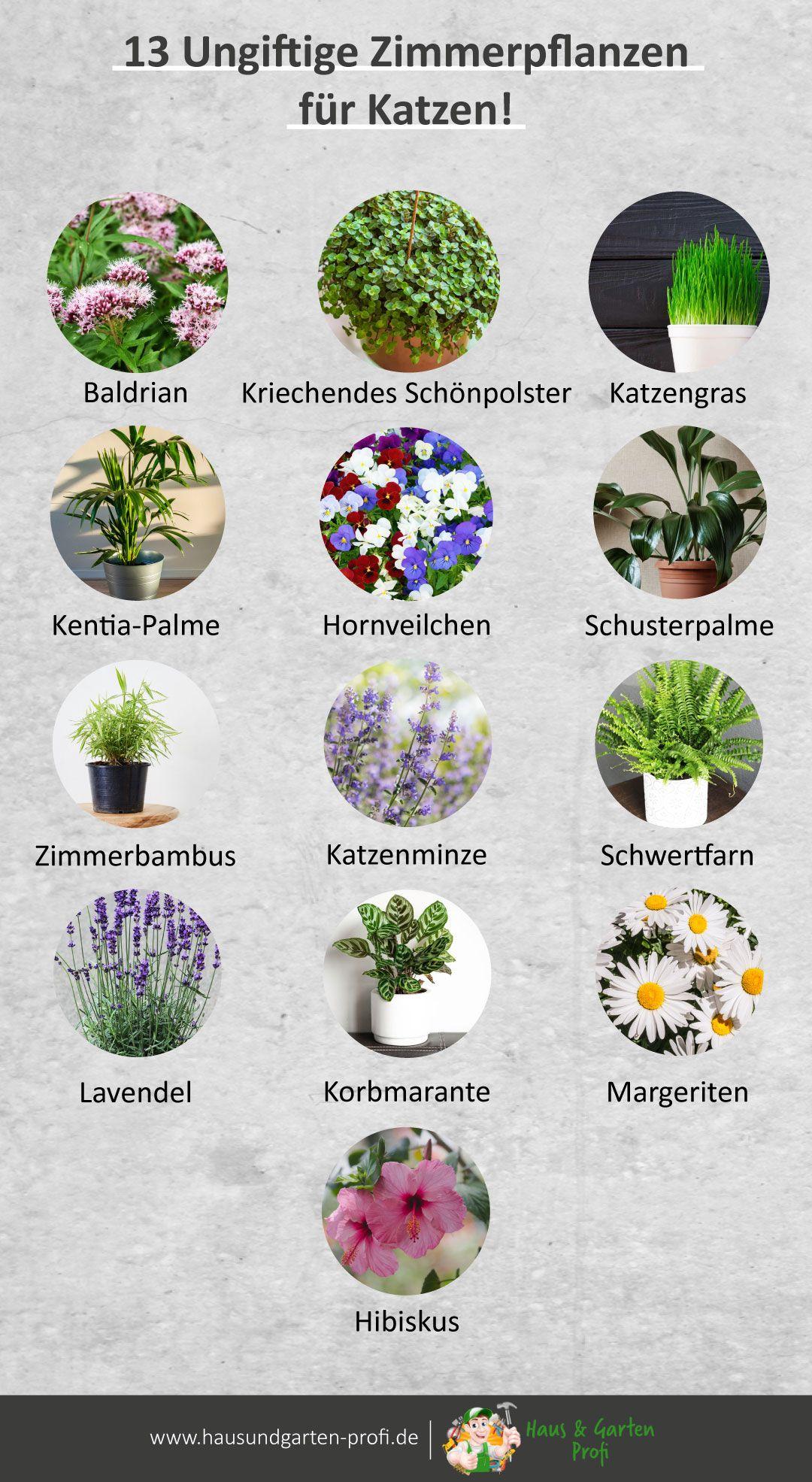 Für kaninchen pflanzen ungiftige Giftige Pflanzen