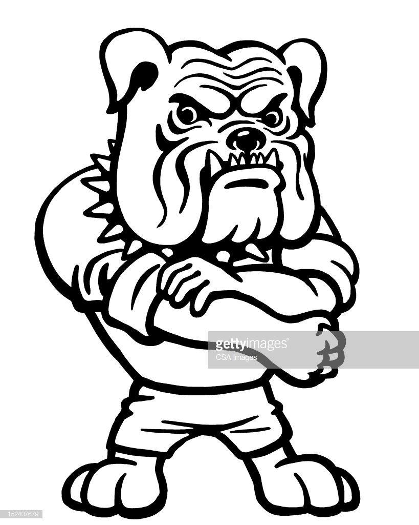 Bulldog Rolling Up Sleeve Bulldog Drawing Bulldog Cartoon