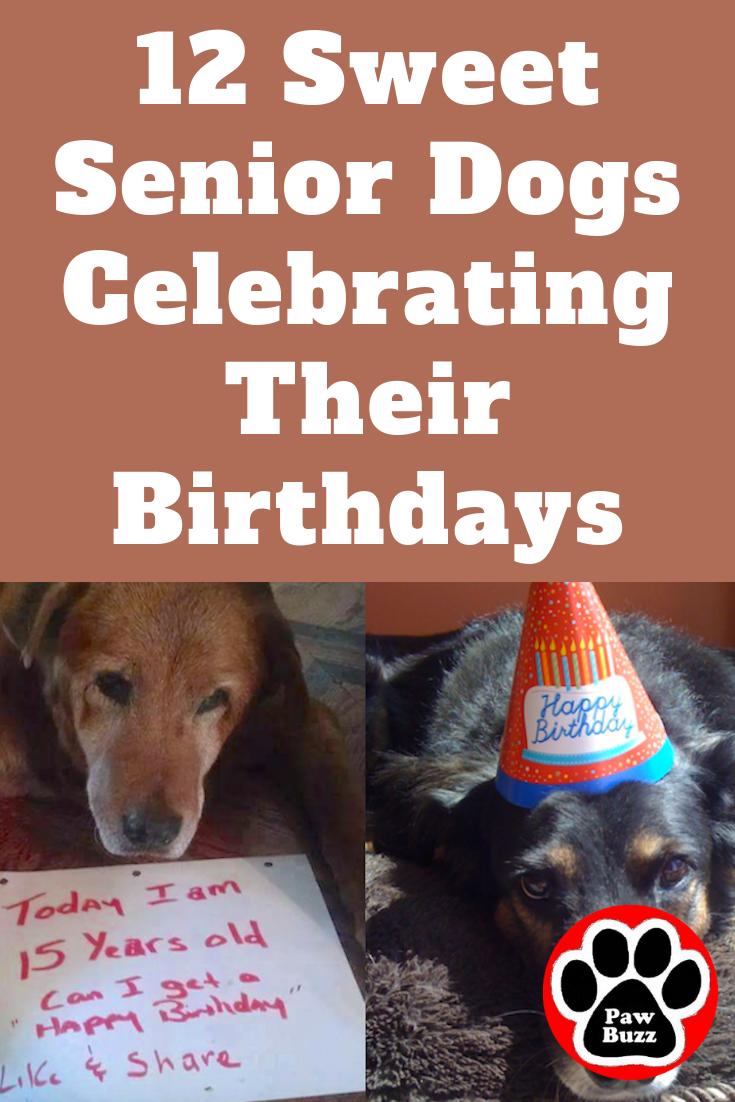 12 Sweet Senior Dogs Celebrating Their Birthdays Senior Dog Dog Birthday Fur Kids
