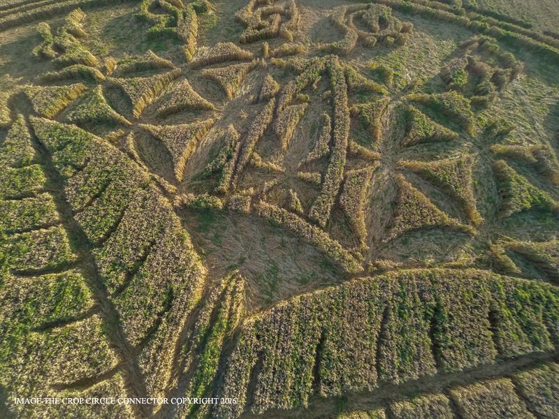 Crop Circle at Ansty, Nr Salisbury, Wiltshire. Reported 12th August. 2016