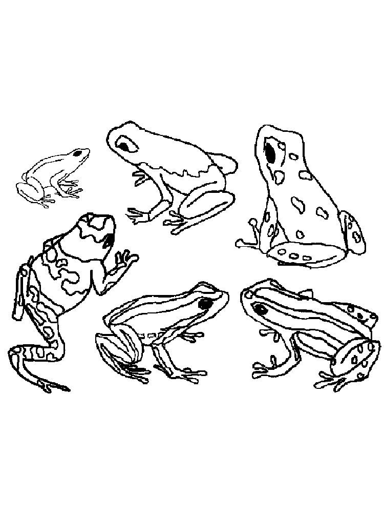 Amazing Frog Coloring Pages Below Is A Collection Of Frog Coloring Page Which You Can Download For Free Frog Coloring Pages Amazing Frog Animal Coloring Pages