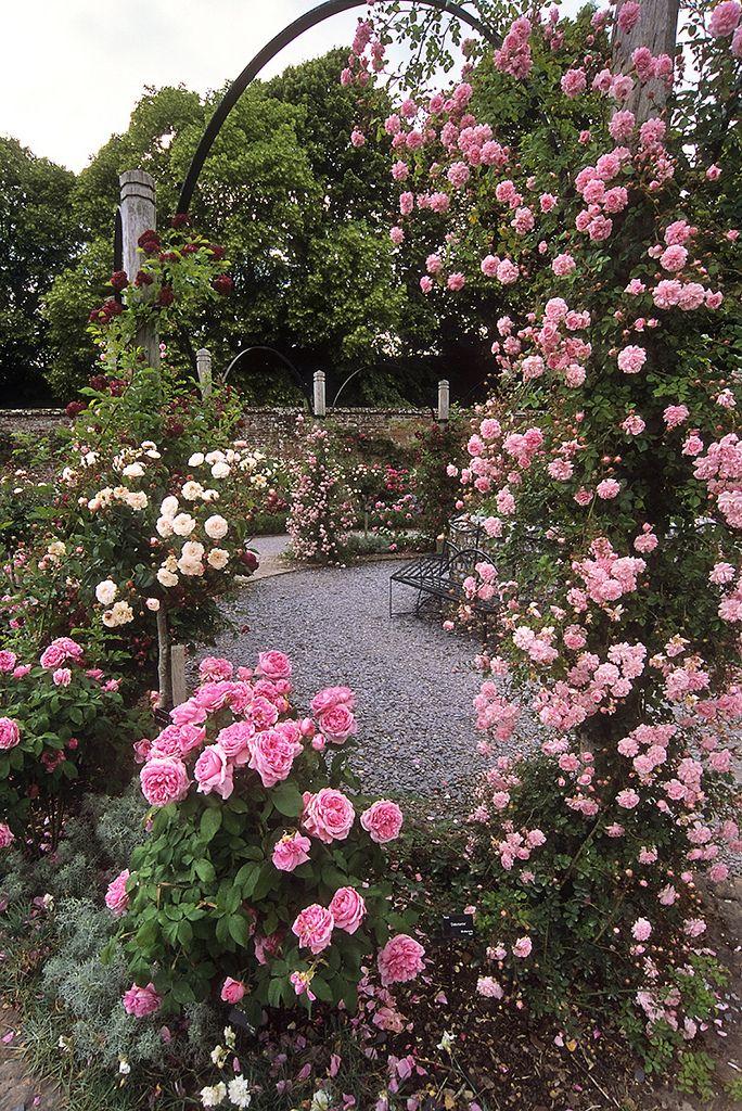 Mottisfont Abbey Rose Garden Hampshire England With Images