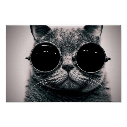 Cool Cat Poster Zazzle Com Cat Wearing Glasses Cats Cat Posters