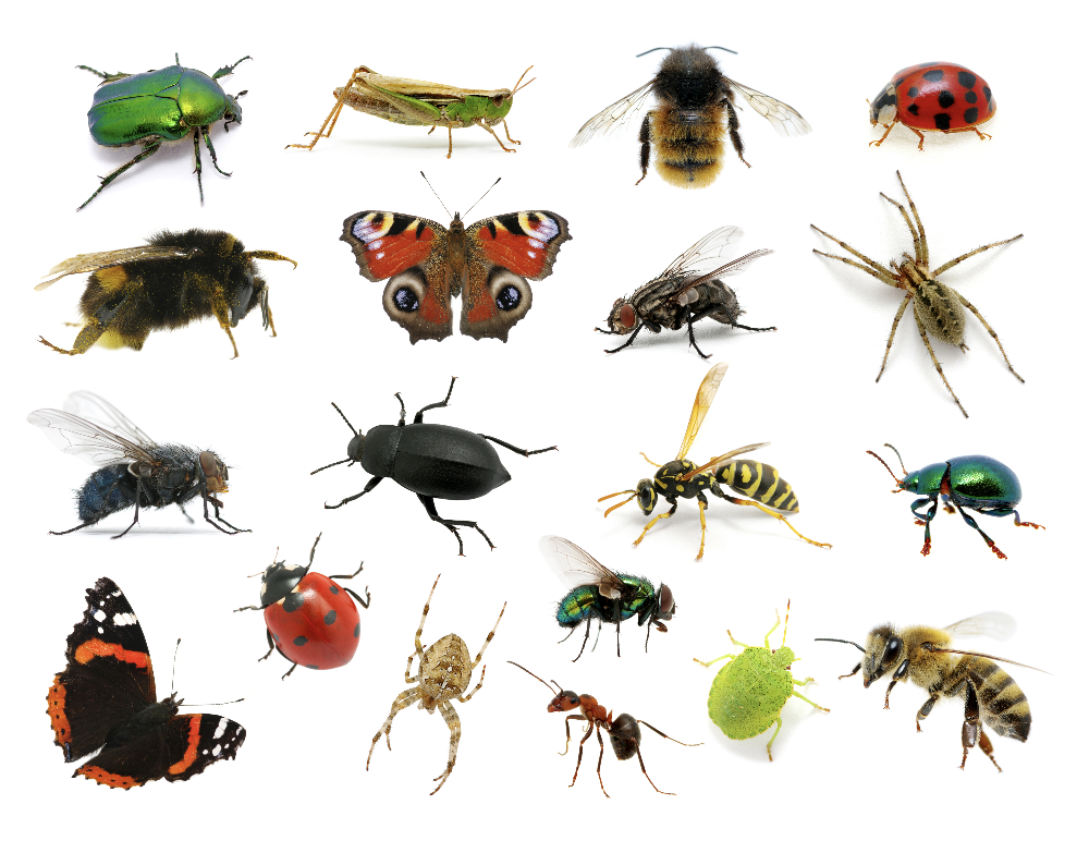 Inside The Great Insect Die Off Insects Animals Animal Species
