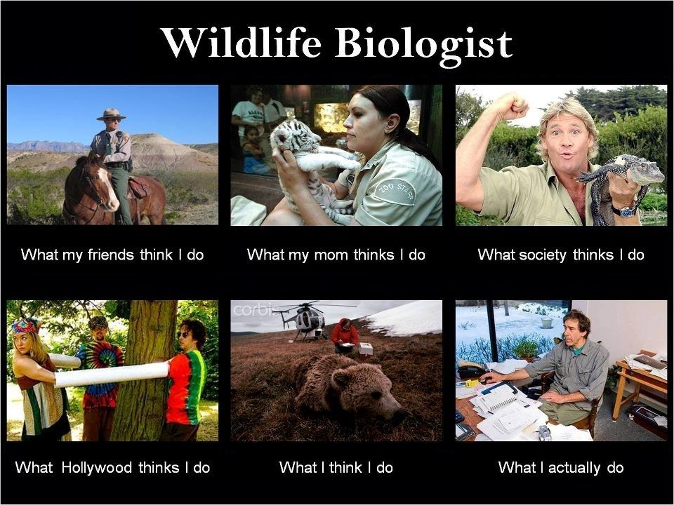 wildlife biologist what i think i do Google Search