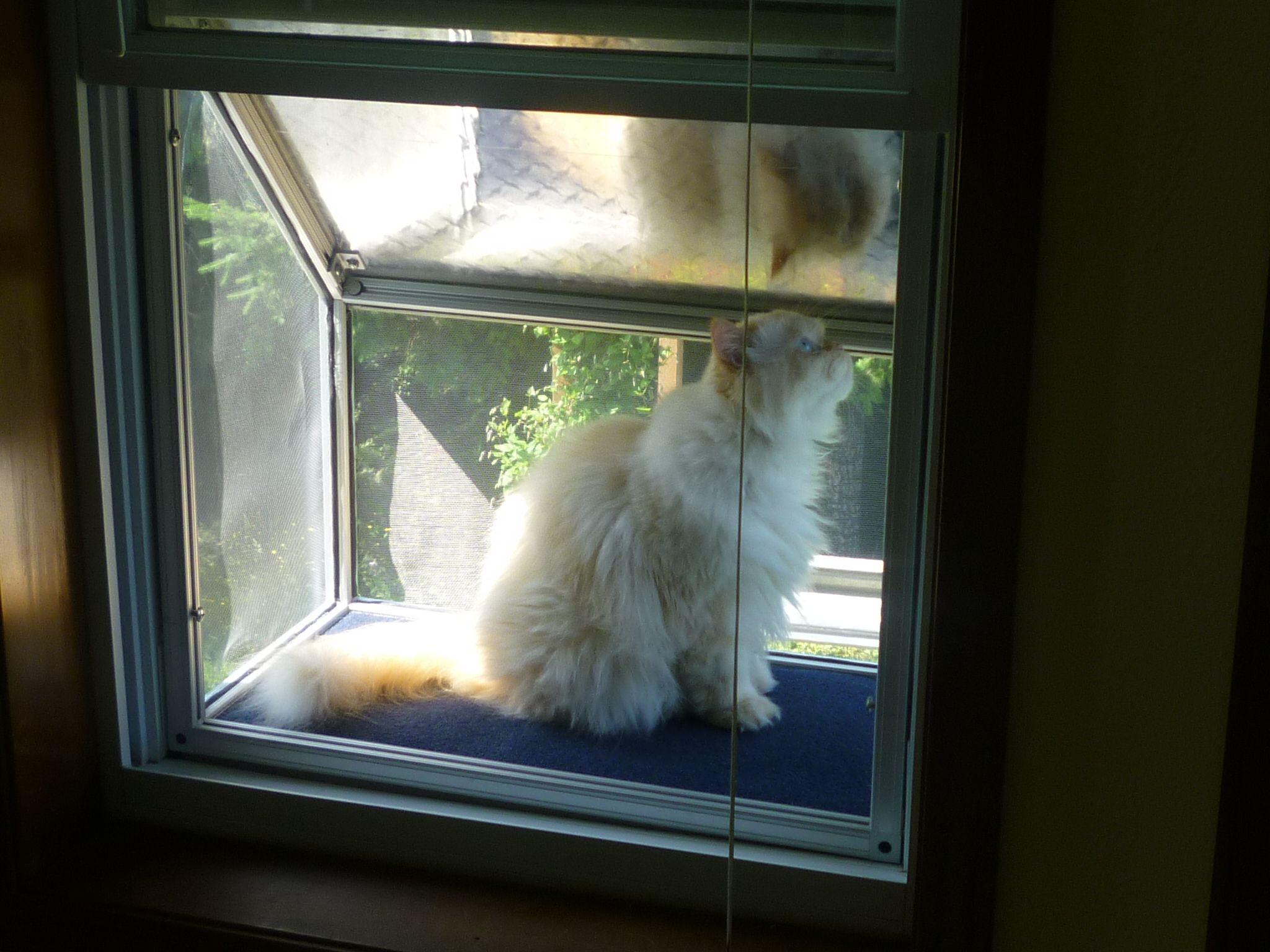 Cat Window Box Inside View 80 20 Animal Planet
