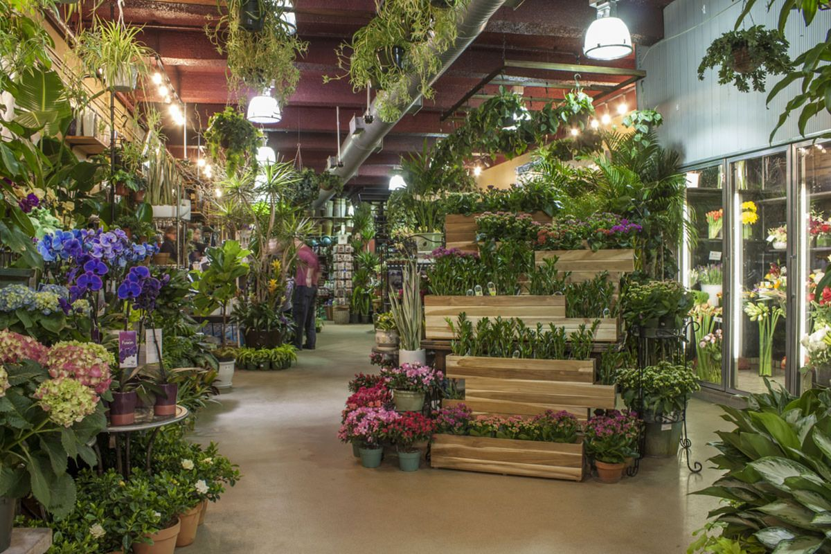 Plant and Flower Delivery NYC Garden center displays