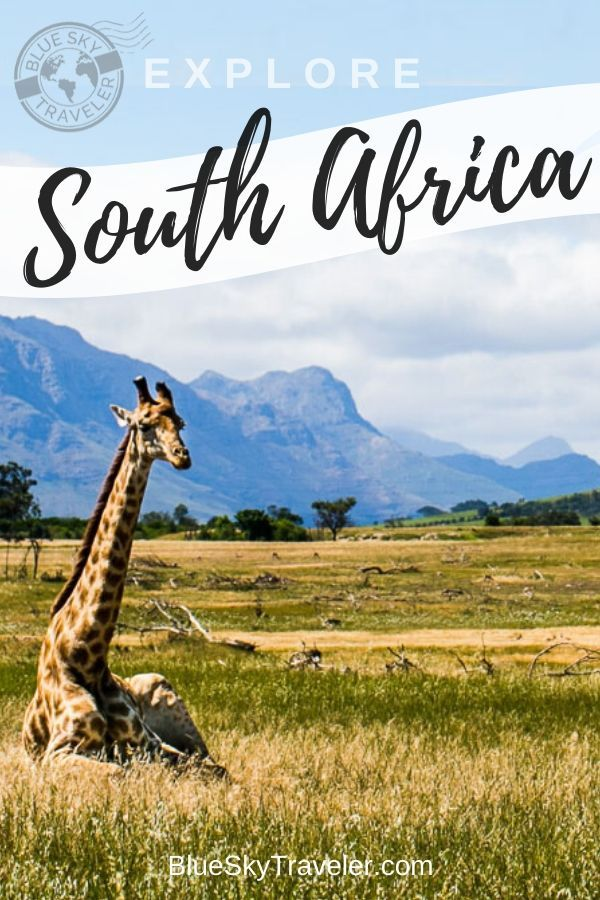 Discover beautiful landscapes and endless coastlines in South Africa.  This is a country with a rich history to explore amongst wineries, safaris, an expansive food culture and adventure activities. #SouthAfrica #TravelGuide #Travel #CapeTown #Africa