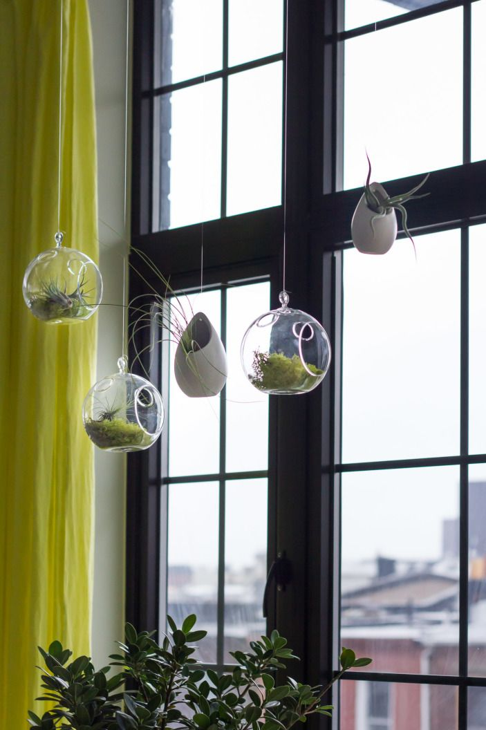 How To Make Hanging Terrariums Succulents Pinterest Hanging