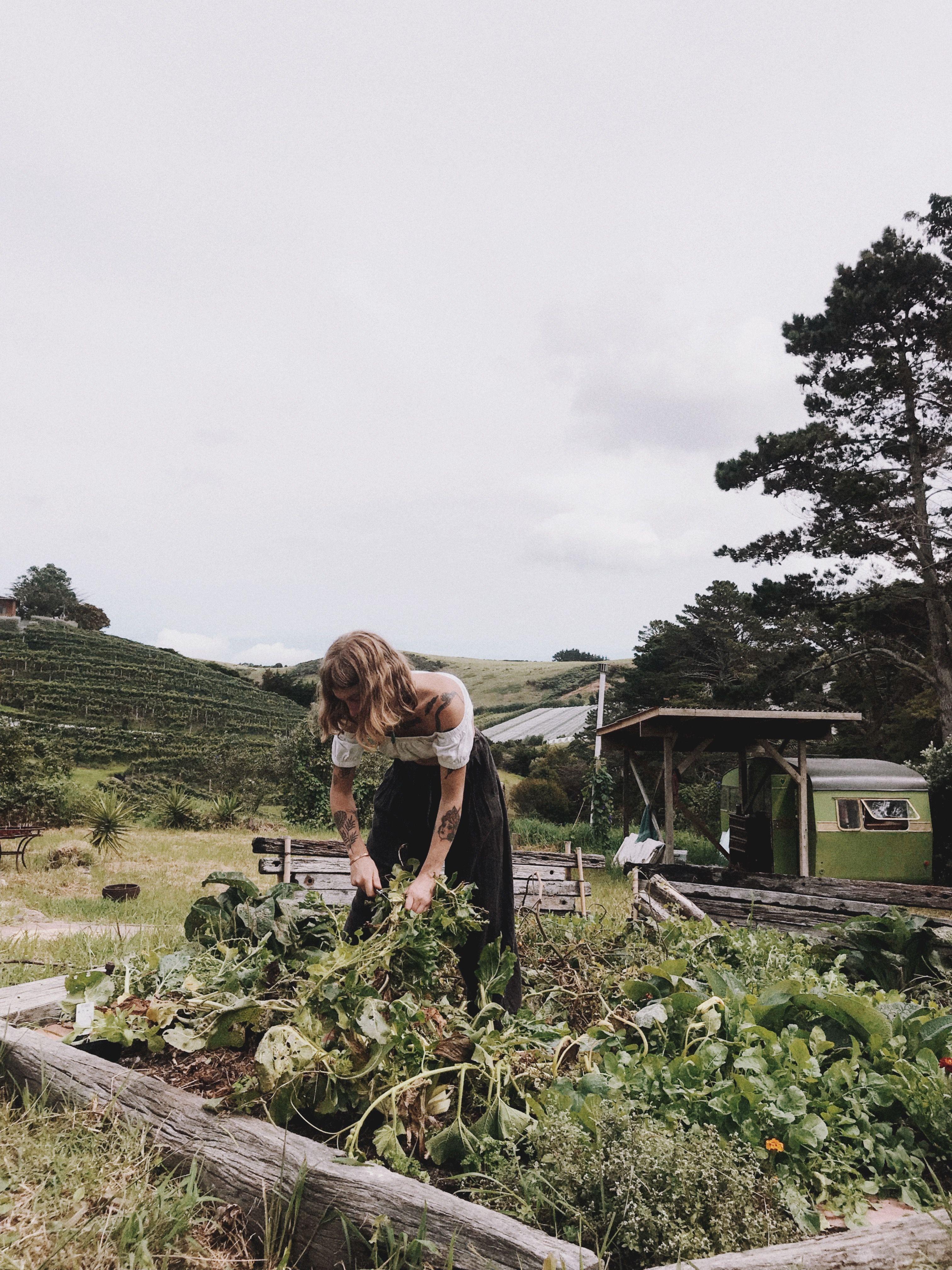 Nurturing Baby Backyard Ferns Newzealand Farm Lifestyle Dream