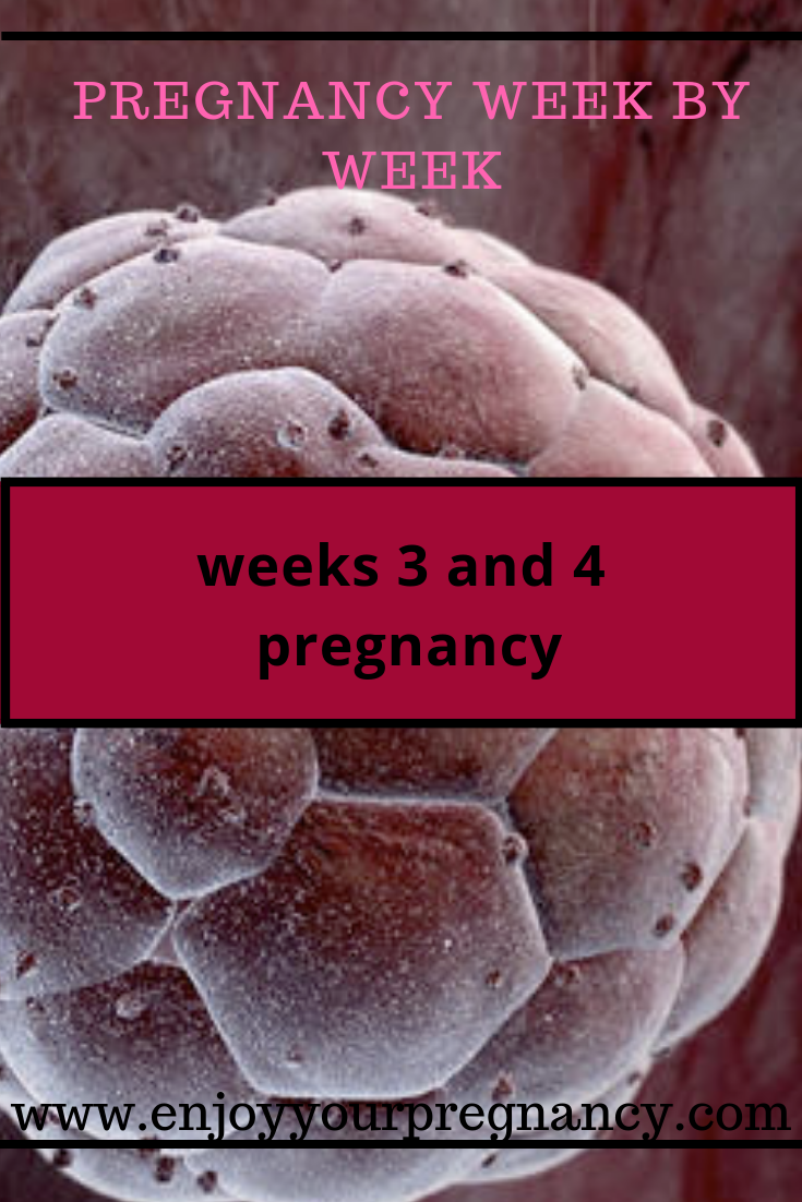 3 weeks and 4 weeks pregnancy symptoms: cramping, metallic taste