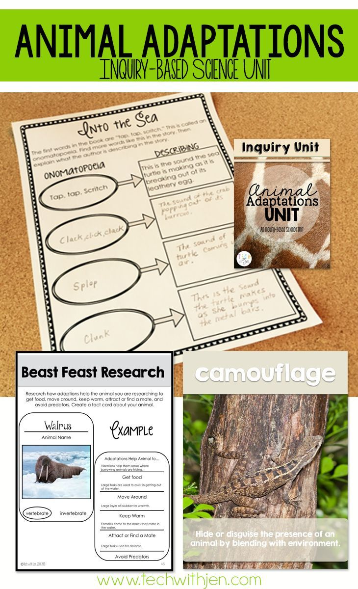 Animal Adaptations Unit Science Literacy Unit Through