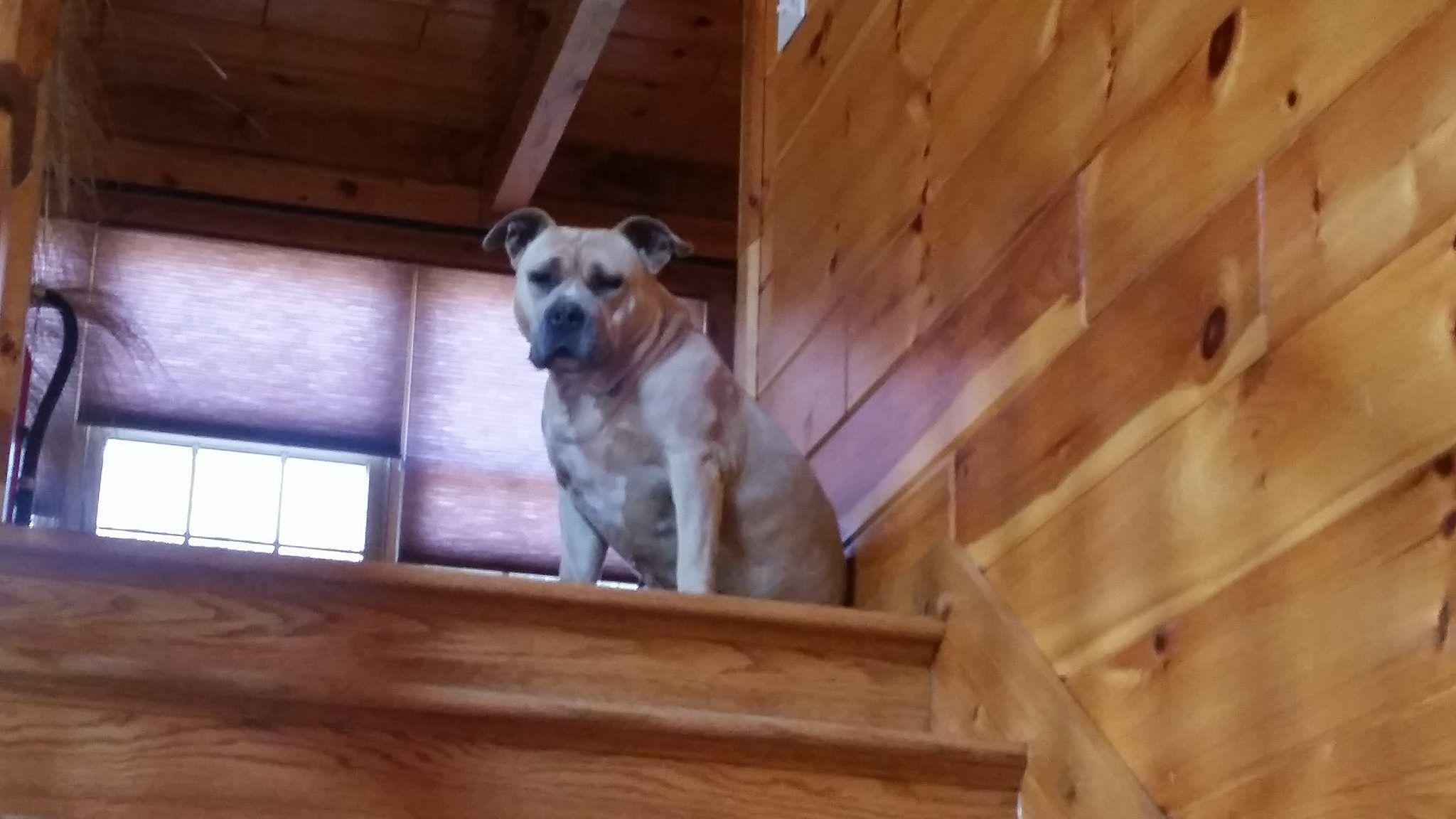 Craigslist Pets Ct New Haven