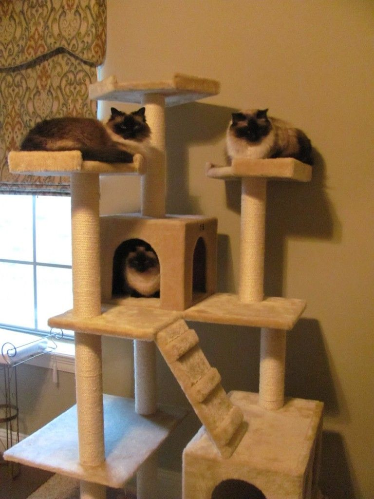 General Cat Tree House Simple Ideas Recycling A Ladder