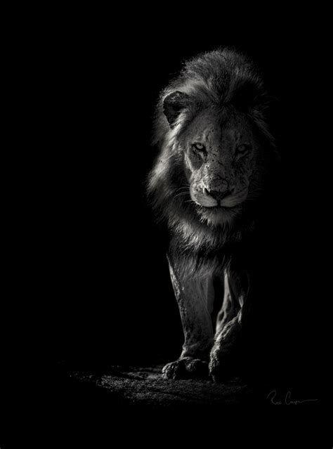 Fotos En Wildlife In Black And White