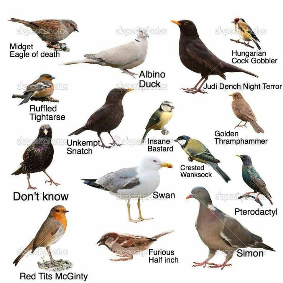 advanced level birdwatching funny pinterest birdwatching and