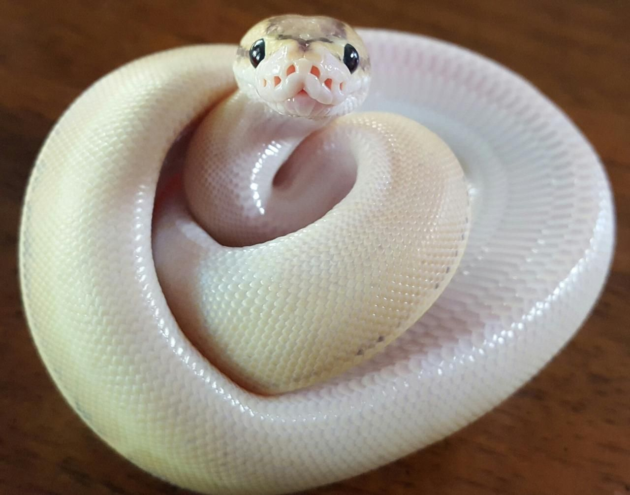 Baby snake smiles!