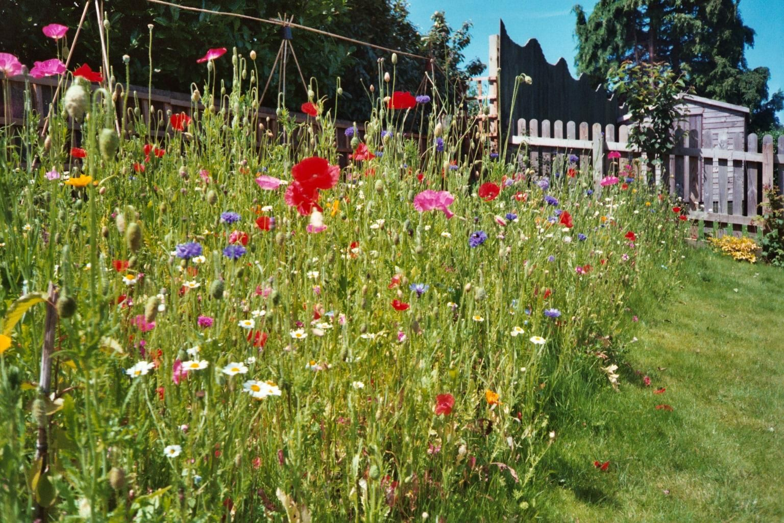 Creating A Wildflower Area / Meadow In Your Garden. More Info Here,  Including A