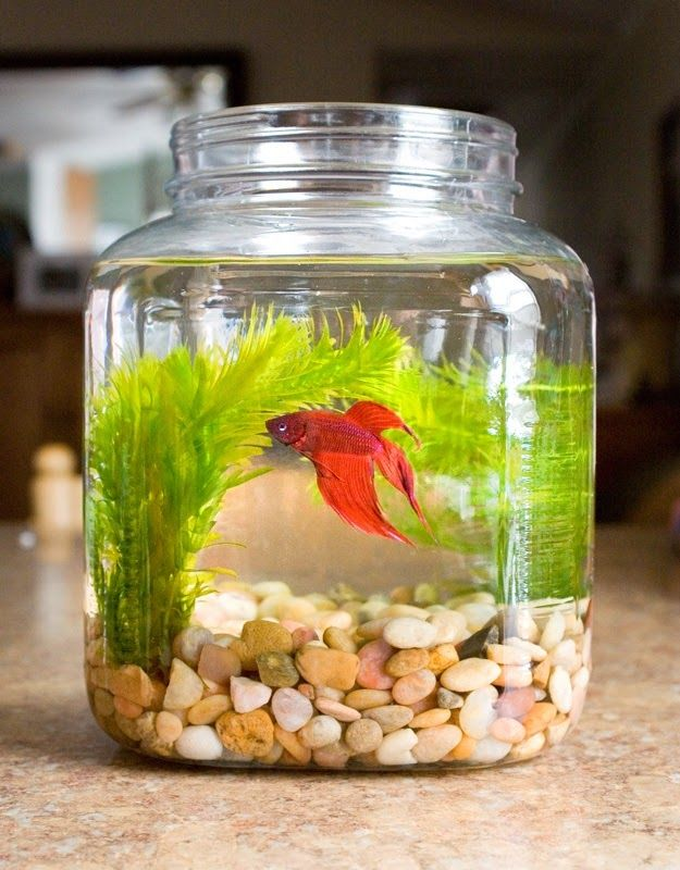 how to make betta fish bowl with plant