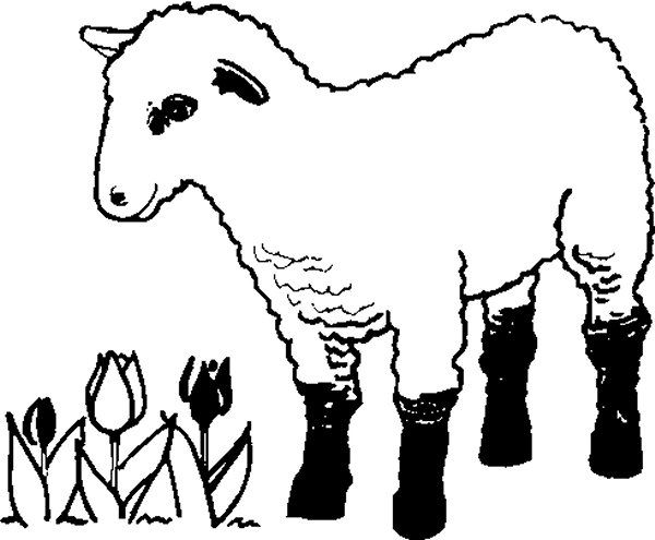 Coloring Pages That Look Like Real Animals : Www.321coloringpages.com images farm coloring pages lamb farm