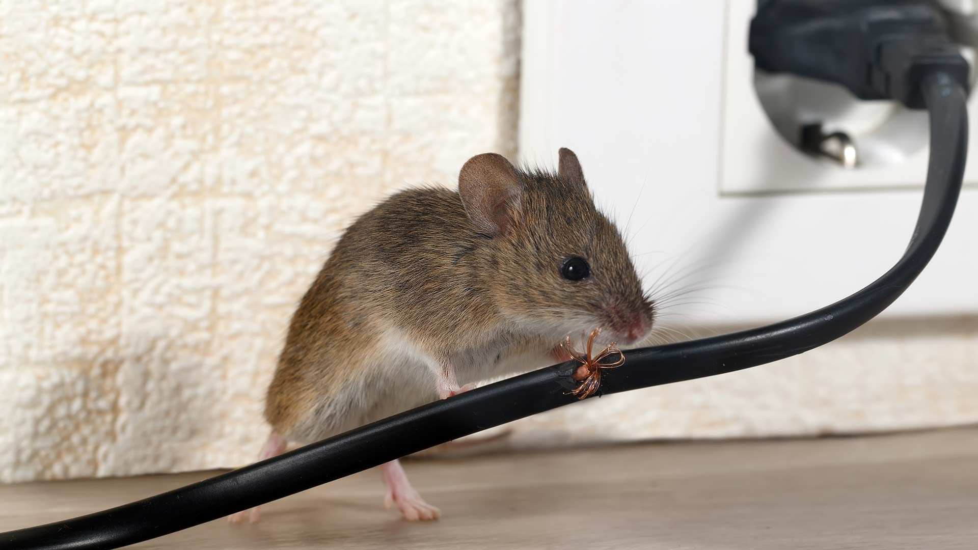 Do Ultrasonic Pest Repellents Really Work? in 2020