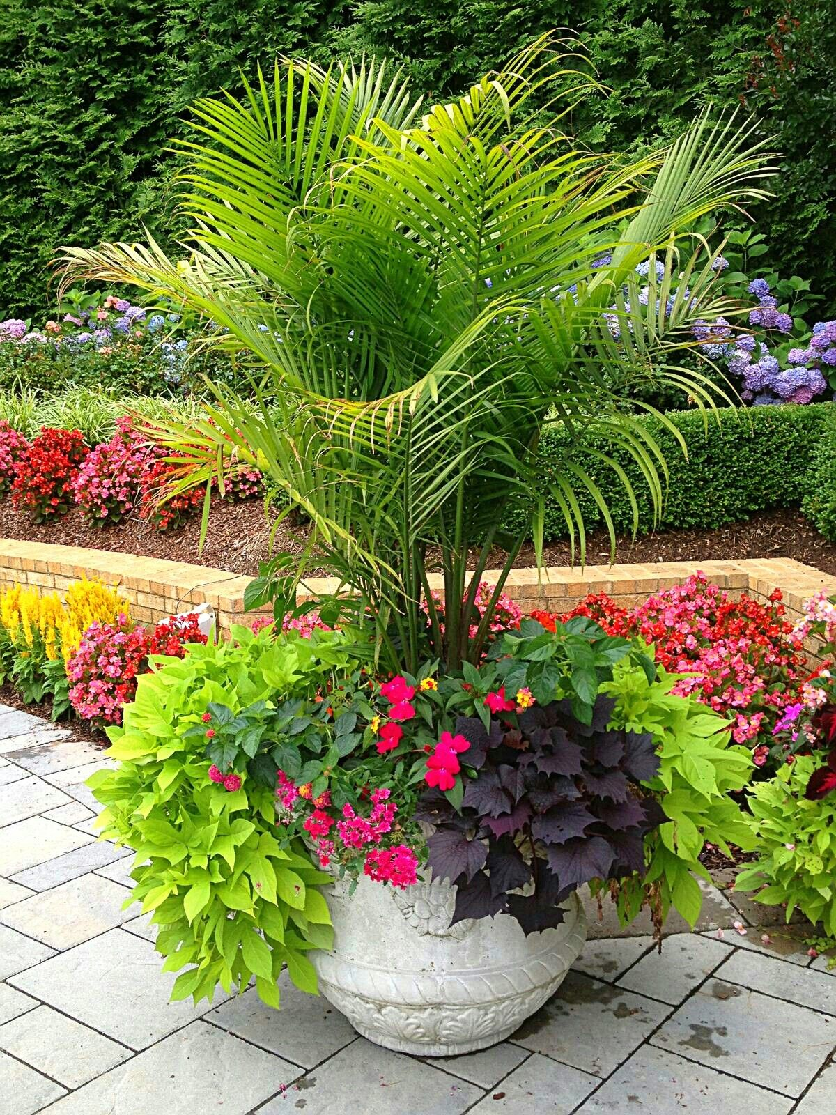 The Only Way I Would Have Any More Areca Palm Pool Plants Summer Planter Container Gardening Flowers