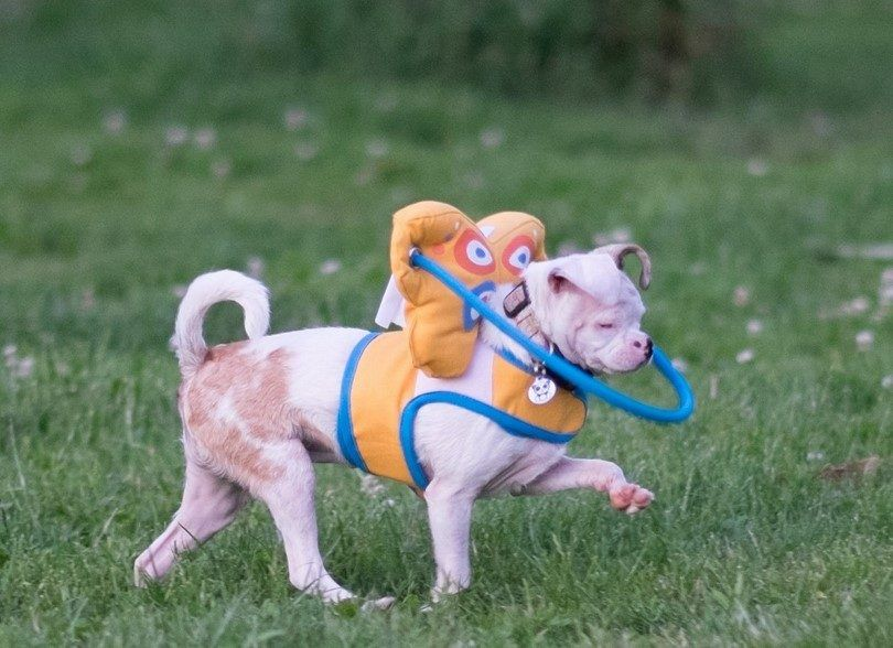 Toys For Blind Dogs Must Have Toys For Your Visually Impaired Dog