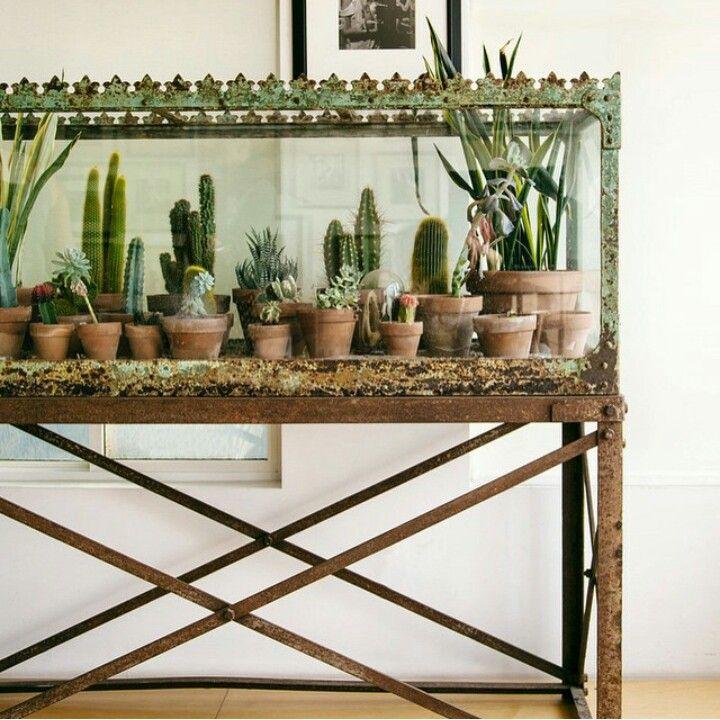 Indoor Plant Decor · Cactus TerrariumFish ...