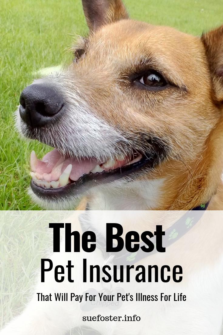 Petplan Pet Insurance Cheap Pet Insurance Pet Insurance Reviews Pet Insurance