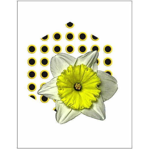 Botanical Art Floral Contemporary Daffodil Modern Decor Minimalist ...