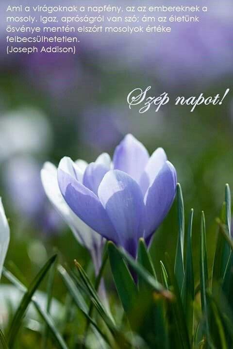 virágokról idézetek Szép napot | Plants, Words, Greetings