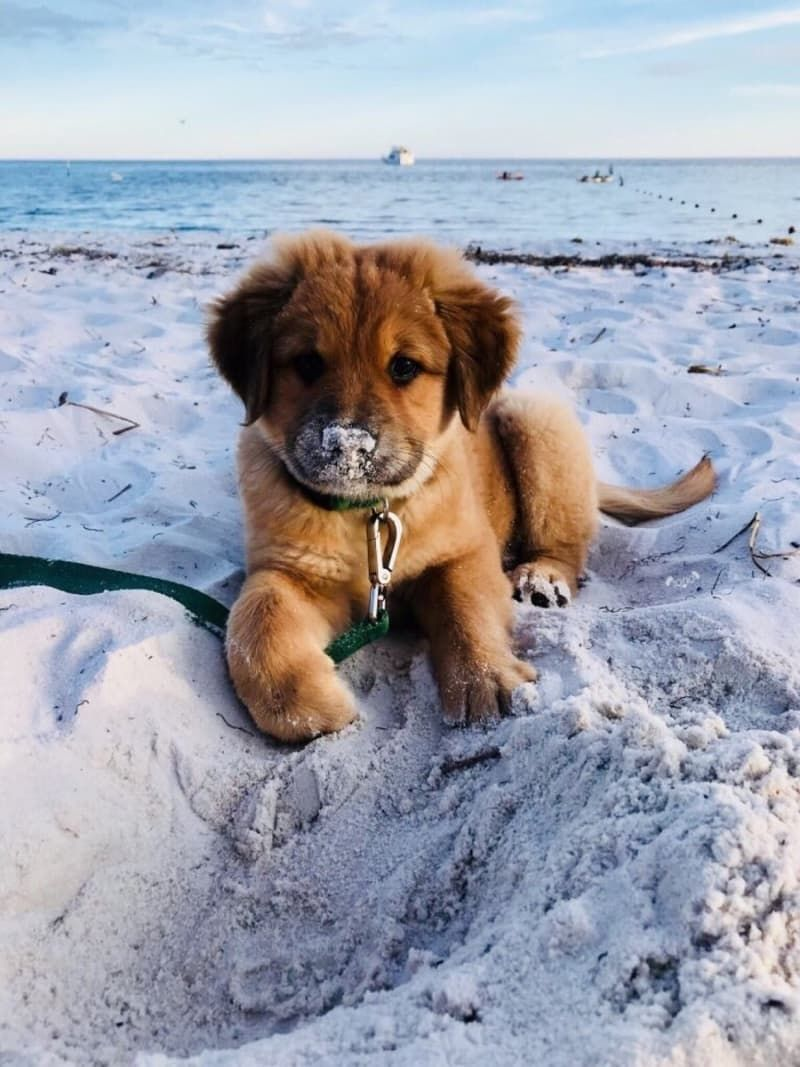 Photo of 19 Perfect Puppies Who Accomplished A Lot In 2018