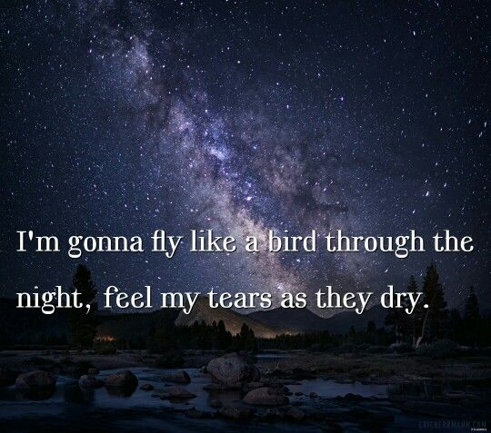 Fly sia chandelier bird night sky tears quote quotes | Words