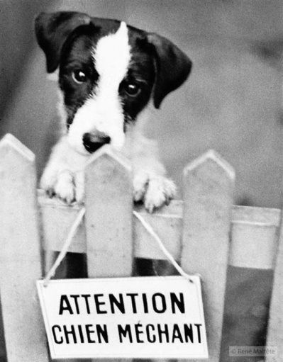 Attention chien mechant