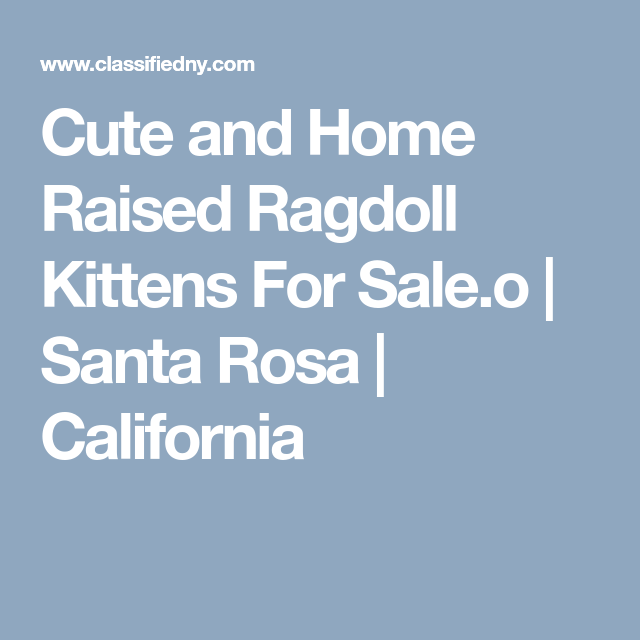 Cute and Home Raised Ragdoll Kittens For Sale.o Santa