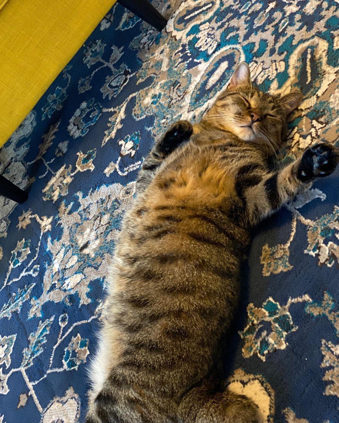 Time for a nappy nap. #cat #kitten #specialneedspet #cute #meow #animals #florida #tabby #catloversclub #thedodo #dailyfluff #catpic #igcats #buzzfeedcats #cats #catlovers #pet #pets #love #catscatscats #catlife #cat #catsoftheday #catlove