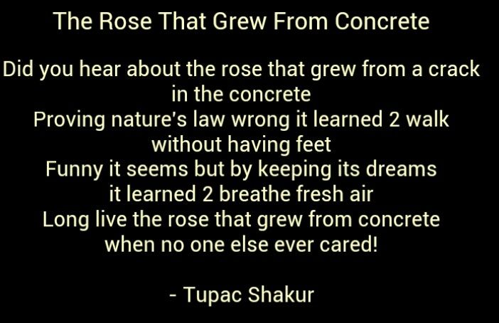 poetic analysis rose that grew from Poetic devices  analogy definition: an extended comparison of two unlike things example: see how tupacs poem is an analogy for a someone who has had a tough life, but has struggled (like the rose) to rise above the obstacles  long live the rose that grew from concrete.