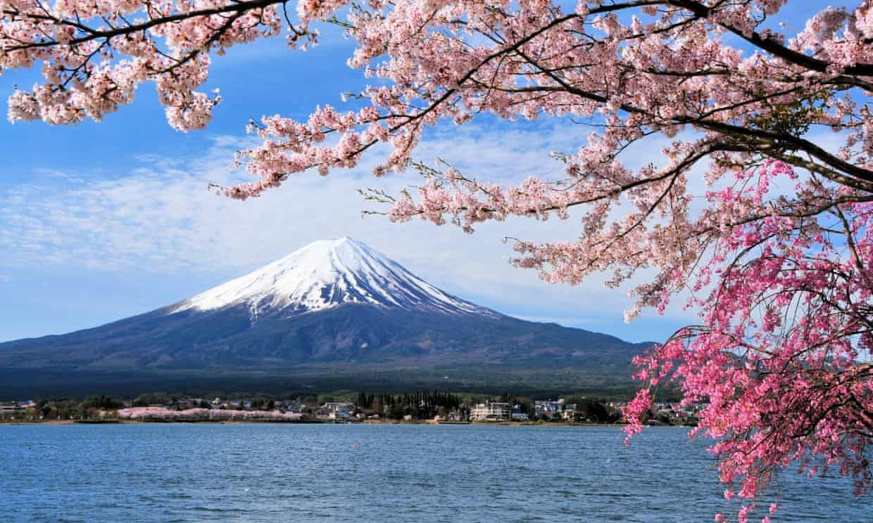 Typhoons Trick Japan S Cherry Trees Into Blooming Months Early Cherry Tree Extreme Weather Mount Fuji