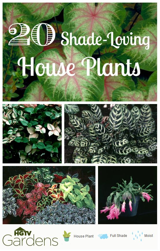 20 Gorgeous Shade Loving House Plants Found These Using The Uber Easy Hgtvgardens Plant Finder