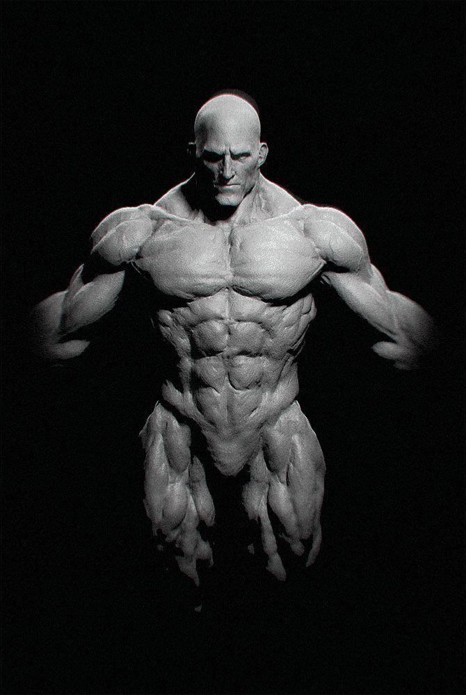 Anterior Front Muscles Form Physique Torso Shoulders Pelvis Head ...