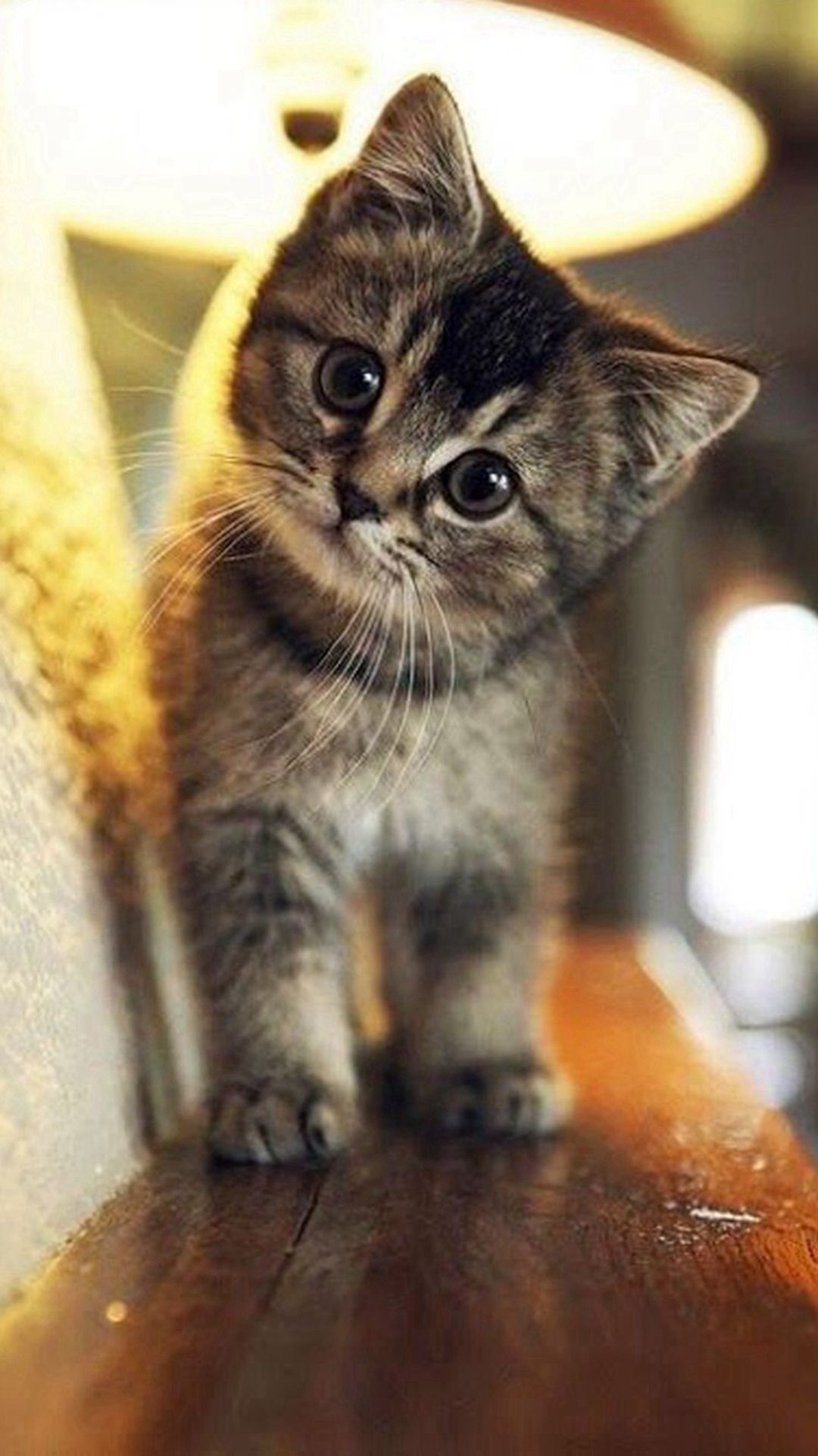 Wallpaper iphone cute cat - Cute Stare At Cat Animal Iphone 6 Plus Wallpaper