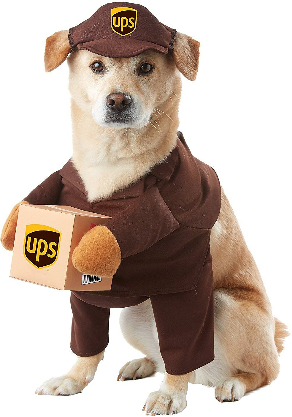 Your Canine Courier Will Deliver The Goods When He S Dressed In